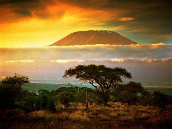 Savannah at Amboseli National Park