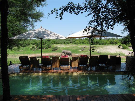 Savute Safari Lodge swimming pool