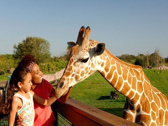 Serengetti Safari Busch Gardens® Tampa Bay (additional charge)
