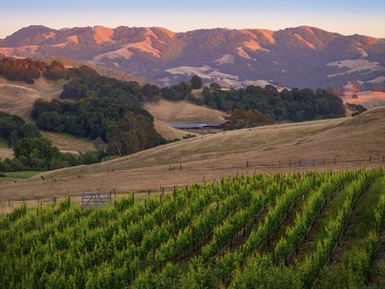 Sunset in Sonoma Valley