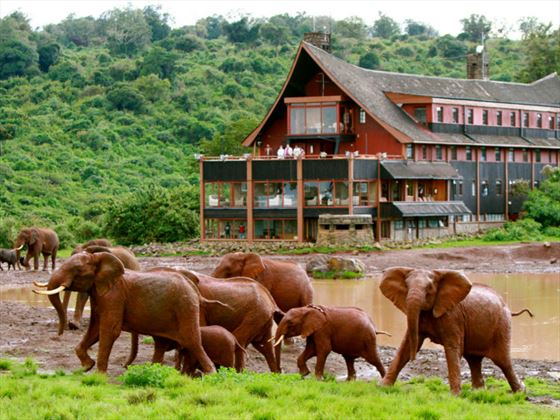 The Ark exterior with elephants