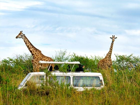 Take a classic safari game drive during your stay