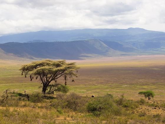 Tree at Ngorongoro