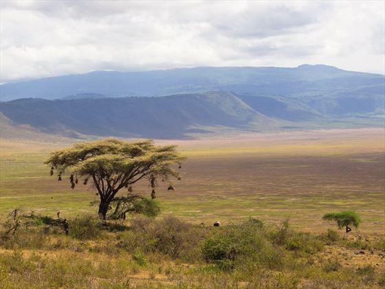 Tree at Ngorongoro