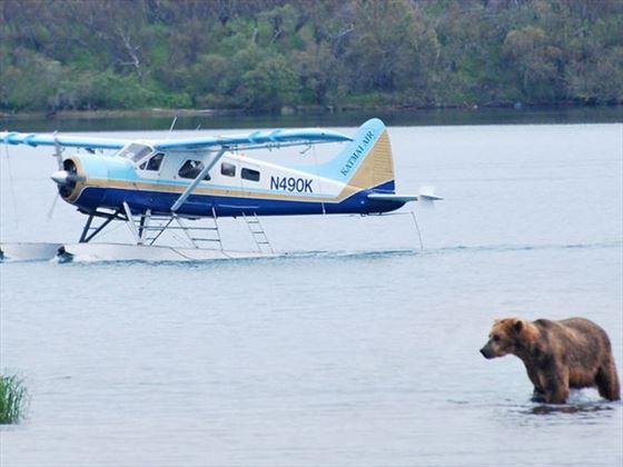 Plane and Bear