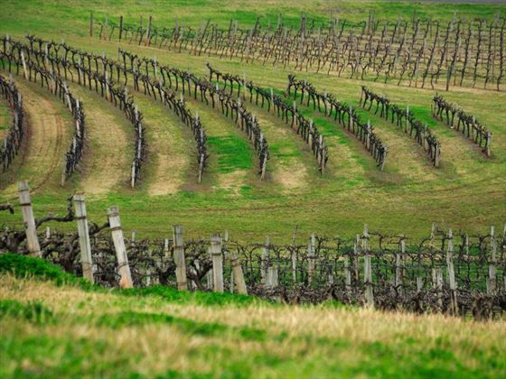 Vineyards in New South Wales