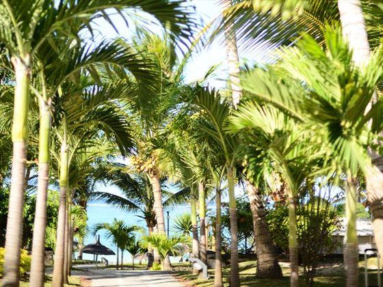 Lush grounds at Veranda Palmar Beach