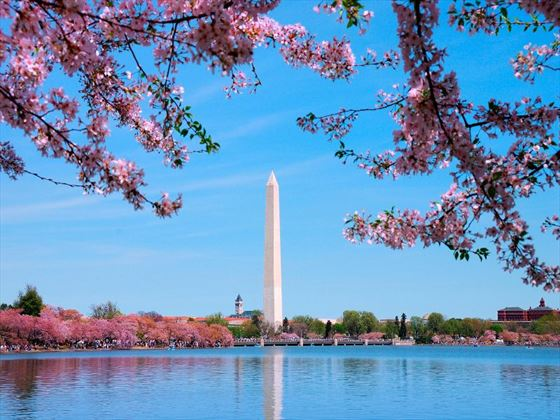 Washington DC in bloom