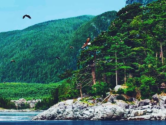wildlife viewing in sonora resort vancouver island
