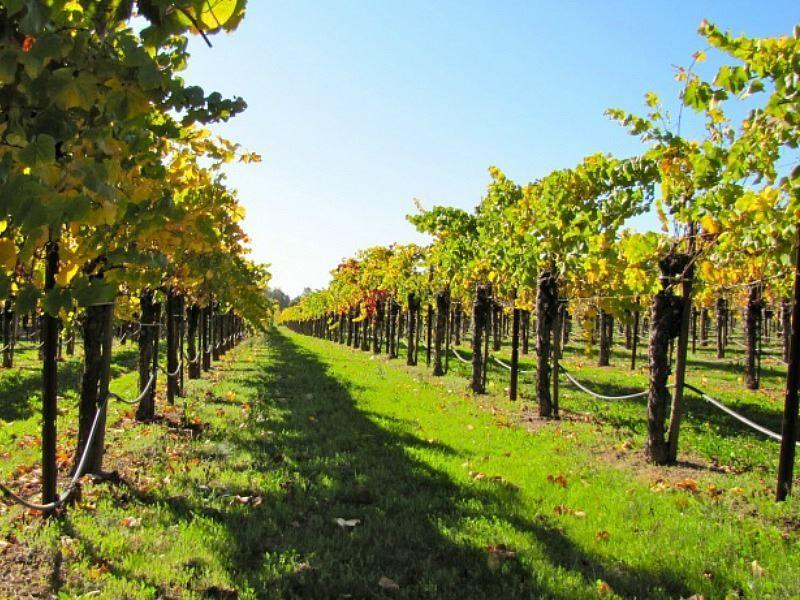 california wine tour san fran
