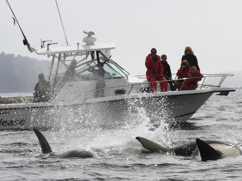 clayoquot wilderness resort whale watching