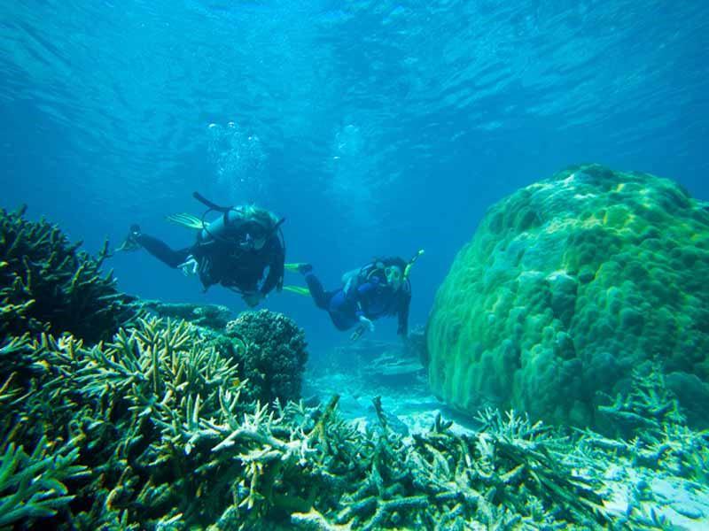 diving just off heron island
