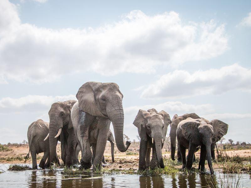 elephants water hole kruger national park