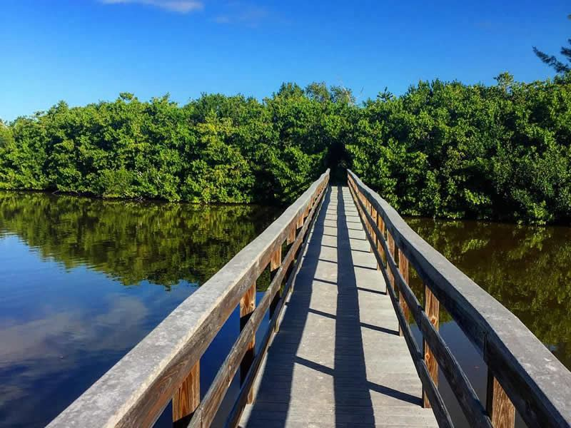 exploring the mangrove paths of sanibel island