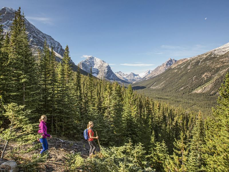 hiking in the forest on the mount edith cavell trail in jasper national park