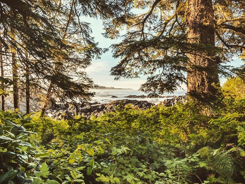 hiking the wild pacific trail vancouver island