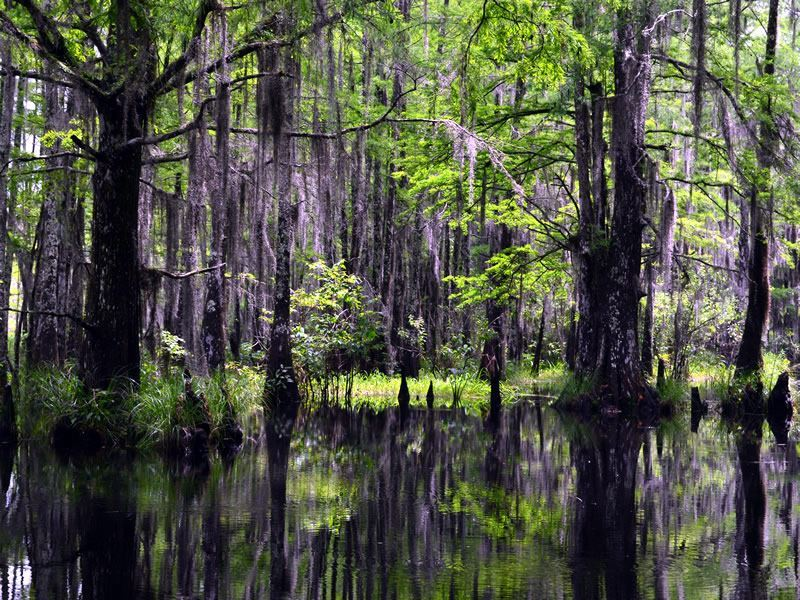 honey island swamp louisiana