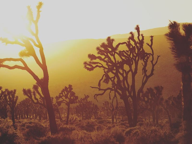 joshua tree national park sunset california