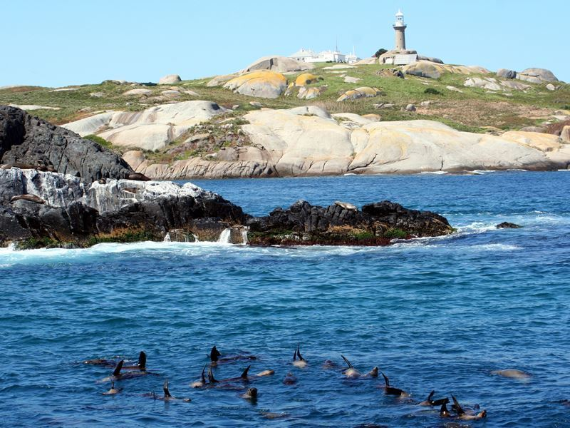 montague island seals new south wales