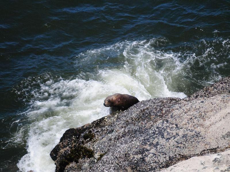 sea lion cave