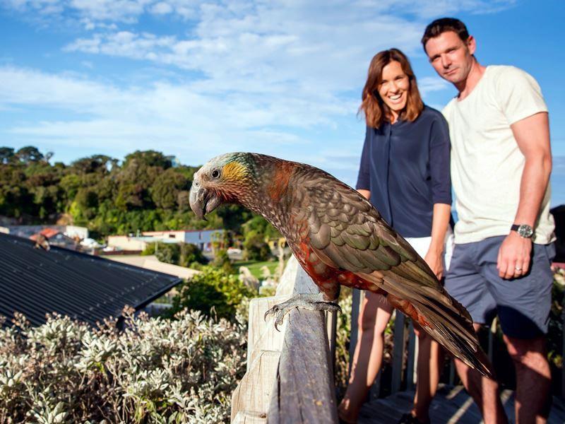 ulva island bird sanctuary stewart island new zealand
