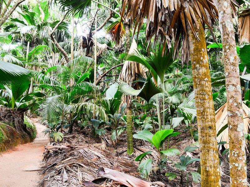 vallee de mai nature reserve praslin seychelles