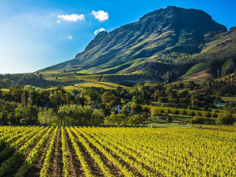 vineyard surrounded by mountains south africa