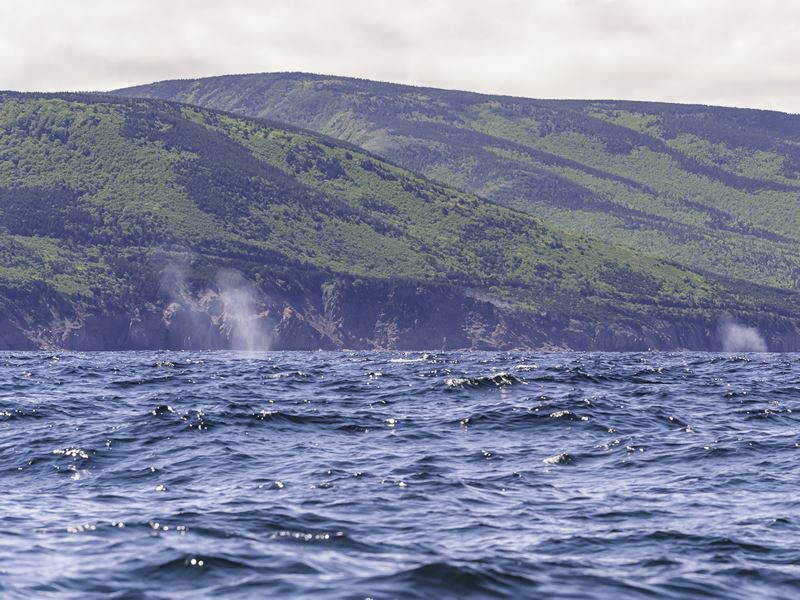 whale watching off cape breton