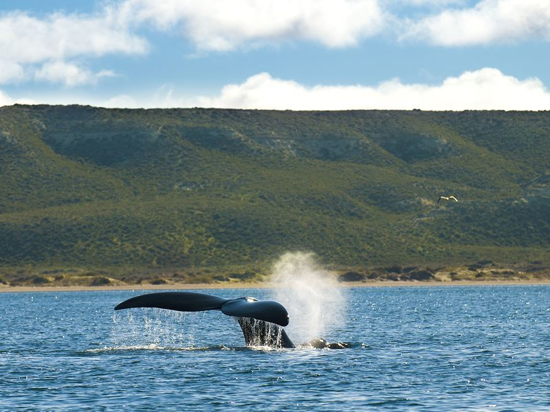 whale watching patagonia