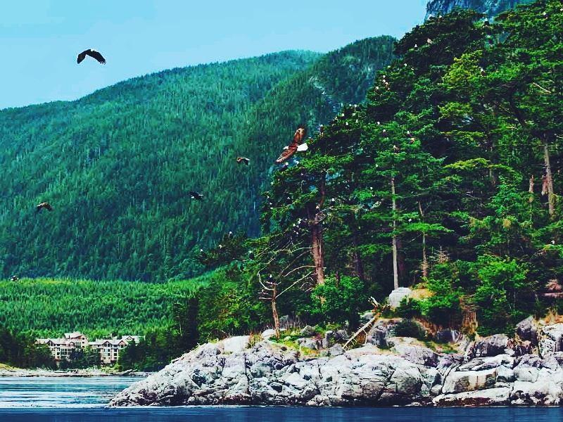 wildlife viewing in sonora resort vancouver island