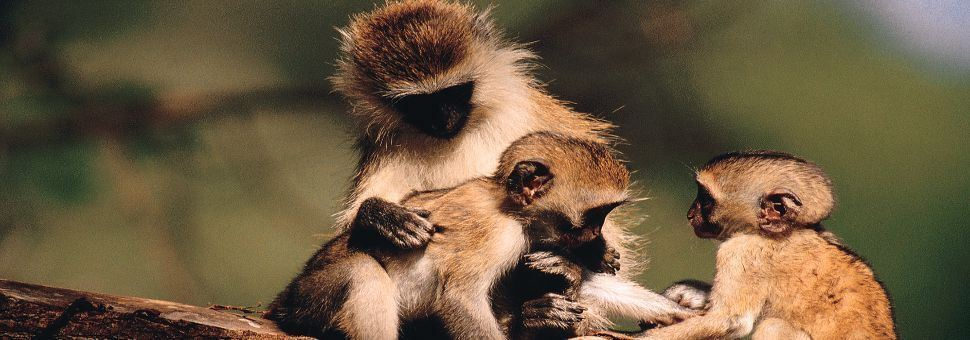 Cheeky wildlife of Samburu National Park, Kenya