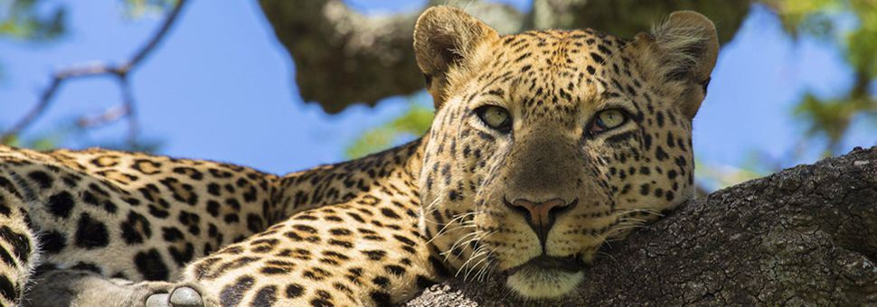 Experience the wildlife on a South Africa safari